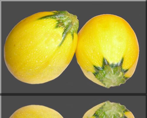 Rezepte fur gelbe runde zucchini